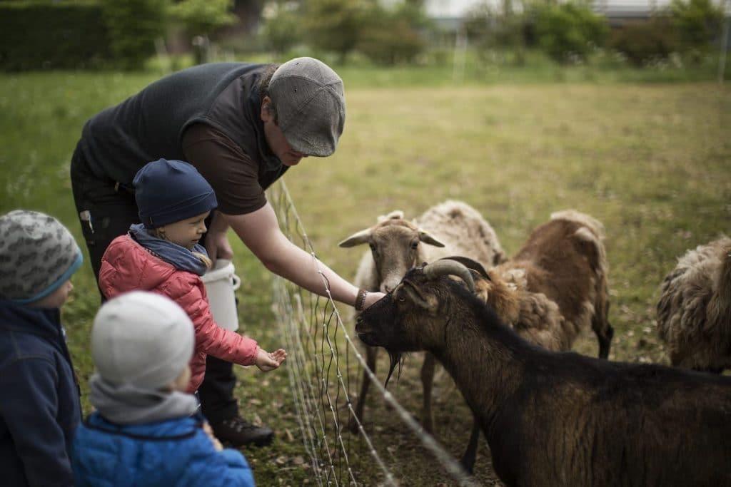 Tiere füttern auf dem Kinderbauernhof im Sauerland