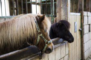 Ponyhof im Sauerland, Erlebnisse für Familien mit kleinen Kindern